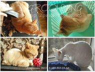 Астрахань: Груминг собак и кошек Астрахани, Стрижки и уход за шерстью Стрижки породные, модельные, гигиенические, подбор индивидуальных практичных стрижек, тримм