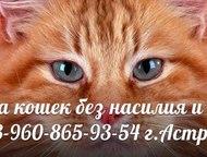 Стрижка кошек без насилия и наркоза Вам надоела вездесущая шерсть в квартире?  У вас шерсть на:  - ковре  - диване  - одежде  - кухонном столе  - в к, Астрахань - Услуги для животных