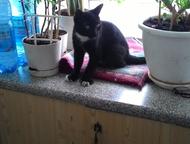 отдам в добрые руки котика 5-6 месяцев черно-белого отдам в добрые руки котика 5-6 месяцев черно-белого окраса ласкового воспитанного к лотку приученн, Кемерово - Продажа кошек и котят