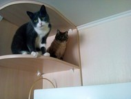 потерялся кот Друзья, срочно нужна Ваша помощь! Потерялся мой кот. Зовут Гриша. Он на фото серый с зелеными глазами. Выбежал из квартиры! пр. Шахтеров, Кемерово - Продажа кошек и котят