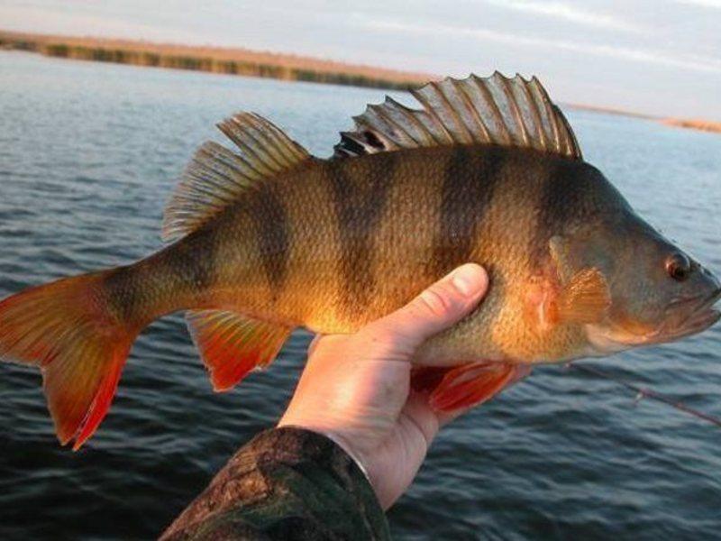 рыбалка в с петрушки