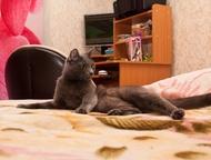 Отдам кота Отдаётся кот, очень добрый и ласковый. В квартирные условия. Возраст почти 2 года. Мимо лотка с наполнителем не промажет, Красноярск - Отдам даром