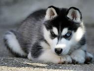 Дрессировка и воспитание собак в Набережных Челнах Индивидуальная дрессировка собак в г. Набережные Челны.   Такая дрессировка собак имеет ряд преимущ, Набережные Челны - Услуги для животных
