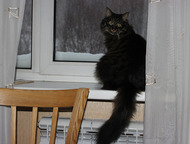 Находка: Отдам кошку в хорошие руки Отдам любителям домашних животных кошку дворовой породы Симону из-за начавшийся у меня аллергии. Кошка домашняя, стерилизов