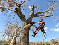 Сочи: Спил, обрезка и удаление аварийных деревьев Спил, обрезка, удаление аварийных деревьев. Выполним работу быстро, качественно, безопасно. В любых стесне