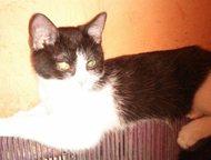 Тольятти: Киску отдадим в добрые руки Эта кошечка-котенок очень добрая, ласковая, не боится других кошек и котов , а на оборот находит с ними контакт , что не м