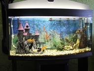 Продам аквариум 180 л Продам большой, красивый панорамный аквариум (180 литров) с тумбой. В комплекте все необходимое для его функционирования.   1. Г, Уссурийск - Купить аквариум
