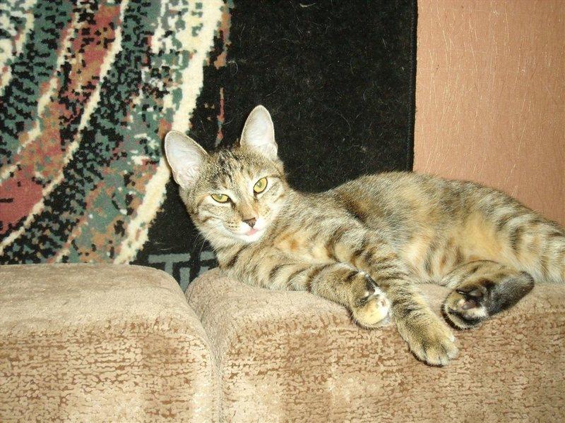 установки кошка ищет кота владивосток для многих